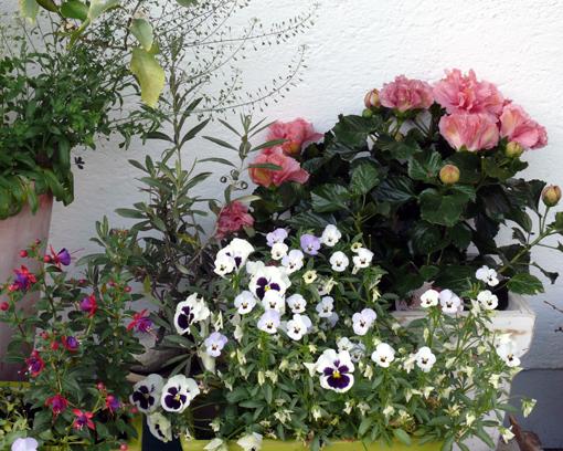 kubelpflanzen1.jpg